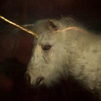 Damien Hirst's Unicorn // Canon 5D