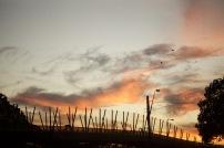 Sunset in Paddington